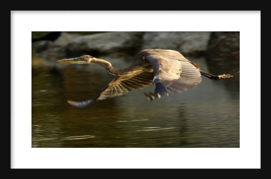 Flight Framed