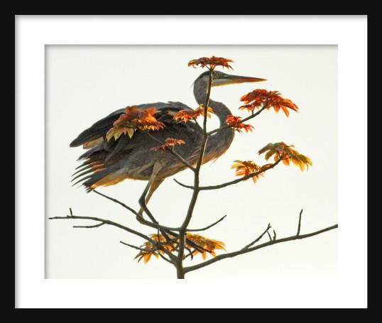 Japanese Silk Painting Framed