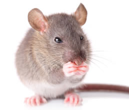 img_left_mouse