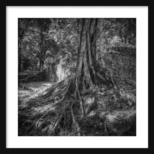 Roots & Wall BW Framed