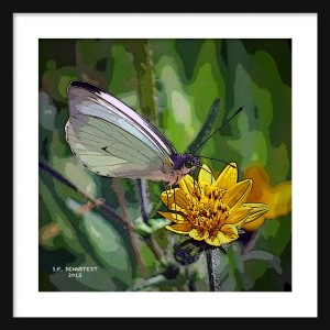Butterfly & Flower Framed