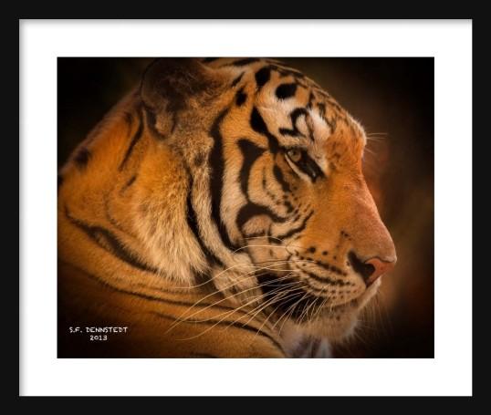 El Tigre Signed Framed
