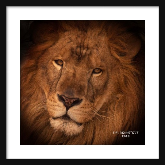 Portrait of a King Signed Framed
