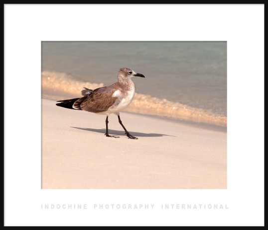 Gull on Beach Framed 1 w IPI