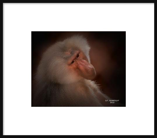 Baboon Framed