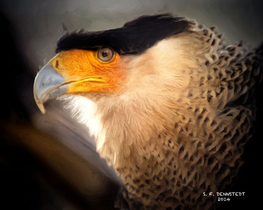 Northern Crested Caracara Painting Signed