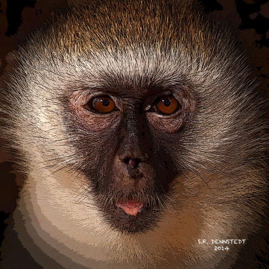 Posterized Monkey Signed