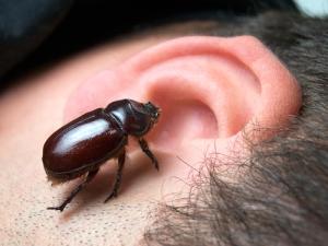 bug in my ear