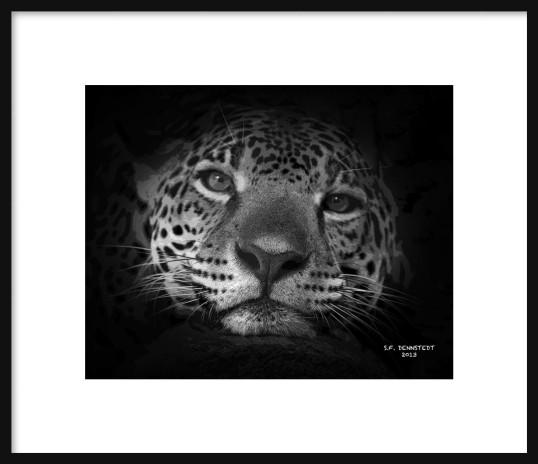 Jaguar Framed