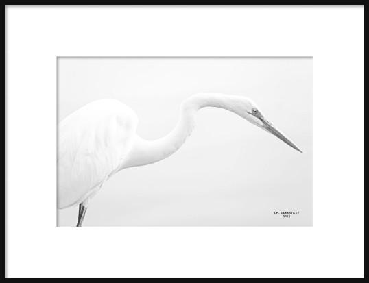 White on White Framed