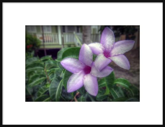 Flowers on Belize Framed