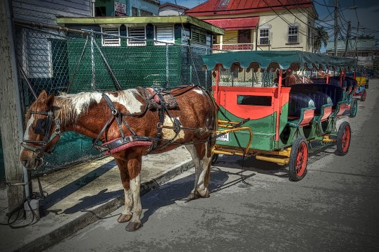 Horse & Carriage WEB