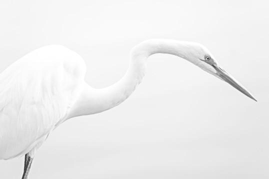 White on White WEB