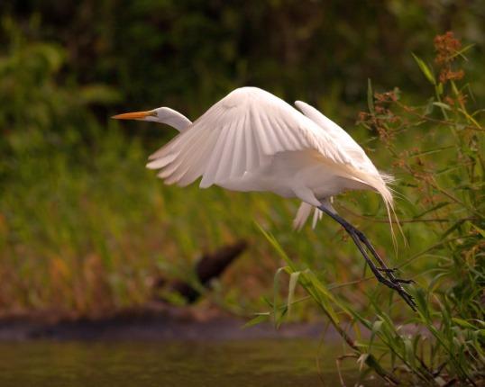 Birds WEB IMG_0663