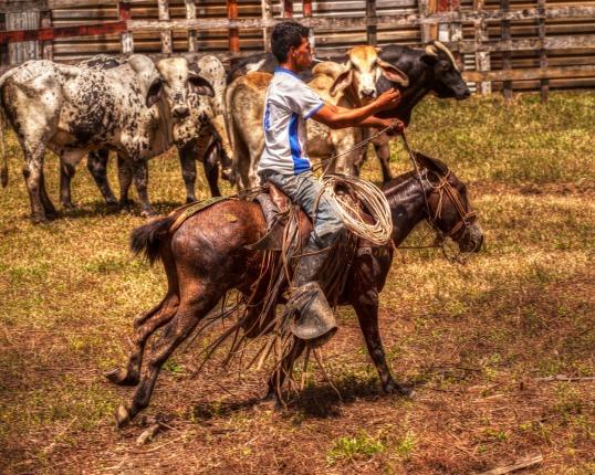 Rodeo WEB IMG_0229_tonemapped