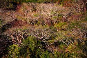 forest-blur-stephen-dennstedt