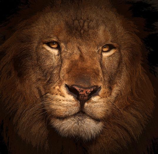 THE KING II FIN