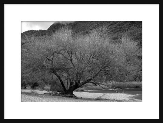 framed-tree-in-bw